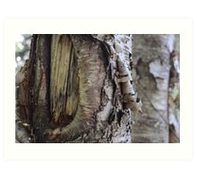 Deep Woods Tree Bark Art Print