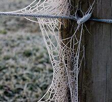 Frozen Web by Ubernoobz