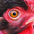 Eye of a Hen by Doty