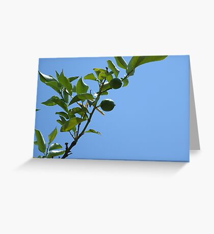 Premature lemon tree Greeting Card