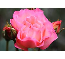 """""""A Rose By Any Other Name"""" Photographic Print"""