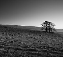 Henside Copse 02 - Yorkshire Dales, UK by Simon Lupton