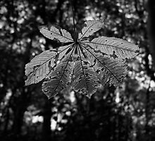 Leaf in the Sun by Simon Lupton