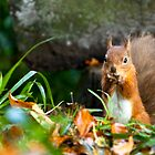 Red Squirrel by Norman Dodds