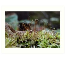 Forest Floor Magic Art Print