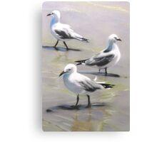 Seagulls Trio Canvas Print