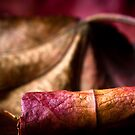 Rolled red leaf by Jérôme Le Dorze