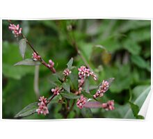 Tiny Pink Buds Poster