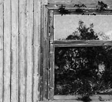 flowers on the window by Nikolay Semyonov