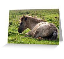 Born Wild & Free - Konik Foal Greeting Card