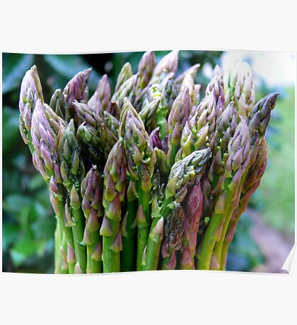 Asparagus Poster