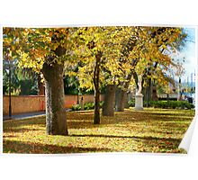 Adaide North Terrace in Autumn Poster