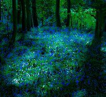 Bluebell Glade by brianallanson