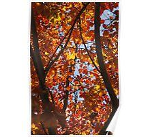 Splendid Autumn Poster