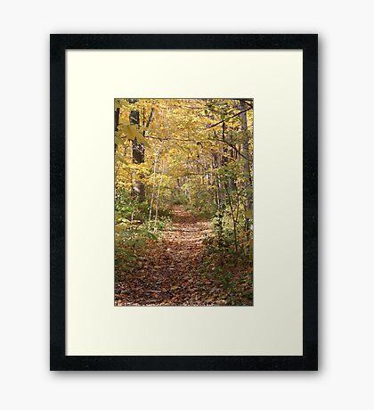 Covered Trail Framed Print