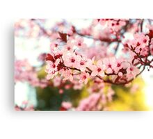 Plum Flowers Blossom Canvas Print