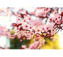 Plum Flowers Blossom Photographic Print