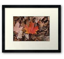 Red On Brown Framed Print