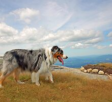 Cezanne Blue on top of the Summit by Diane  Kramer