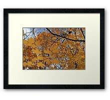 Leaves On Leaves Framed Print