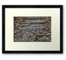 Three Woods Framed Print