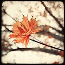 Maple Bokeh by Marc Loret