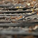 The Rail Road Ties by Dean Mucha