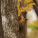 Tree Nuts by Dean Mucha