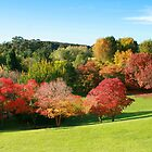 Adelaide Mount Lofty Botanic Garden in Autumn by Kelvin  Wong