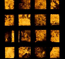 Window Boxes-2 by ScaredylionFoto