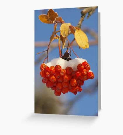 Mountain Ash Berries with Snow Greeting Card