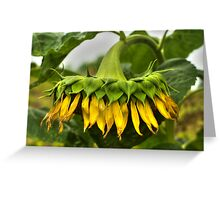 Virginia Sunflower Greeting Card