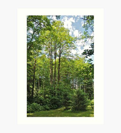 Acacia Tree Art Print