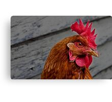 Chook Canvas Print