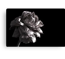 Monochrome Rose Canvas Print
