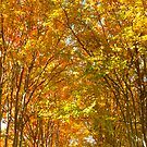 Fall Tree Canopy by Jonathan Green by Jonathan  Green