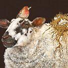 Best Nest by Vicki Sawyer