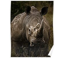 White Rhino - Face to Face Poster