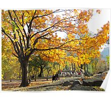 Autumn afternoon in Central Park, NYC Poster