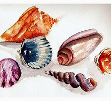 Summer's Shells by Sandra Gale