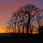 Sunset silhouette by Fiona MacNab