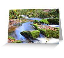 Cornwall: Autumn at Goliath Falls Greeting Card