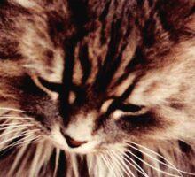 Gray Persian Cat Sticker