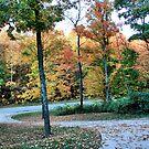 Fall Drive by shellyb