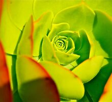 green succulent by Jessica Karran