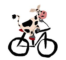 Funky Cool Black and White Cow Riding Bicycle Photographic Print