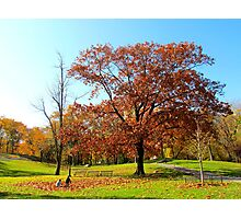 Fun in the park! Autumn in New York City  Photographic Print