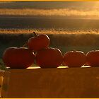 Orange Sunshine by Brenda Dahl