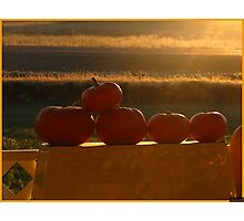Orange Sunshine Photographic Print