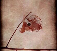 Rock a Bye by Rozalia Toth